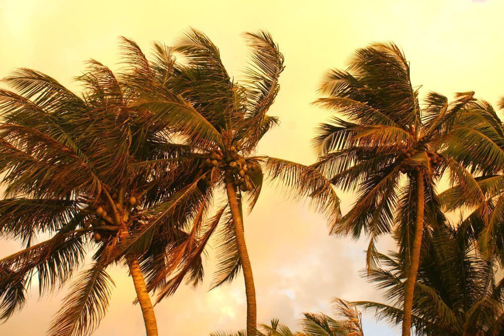 gipsyhearts_srilanka_palms_04028