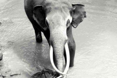 Gipsyhearts_srilanka-elephant-walldecor