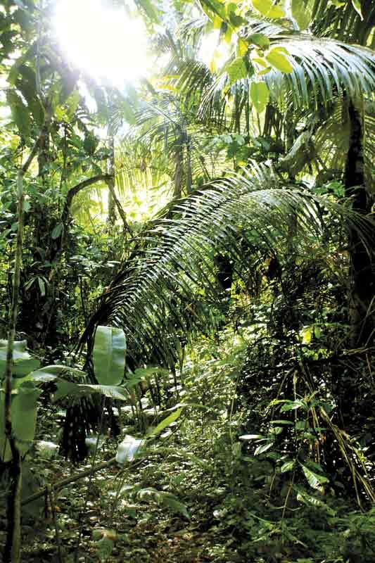 gipsyhearts-peru-rainforest-walldecor