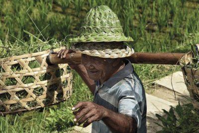gipsyhearts_wandbilder_rice-farmer_bali