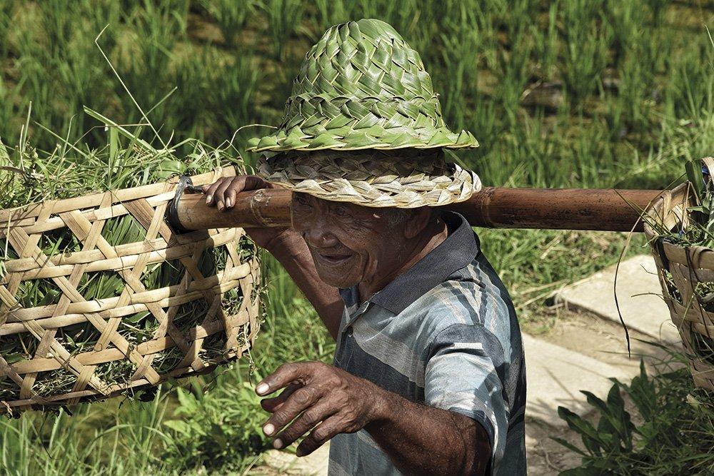 gipsyhearts_wandbilder_rice-farm_bali