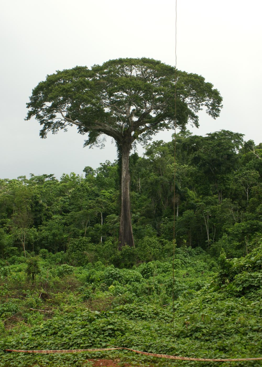 wandbild Jungle Peru